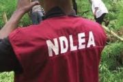 NDLEA Arrests 21 Drug Dealers, Seizes 299kg of Illicit substances In Taraba