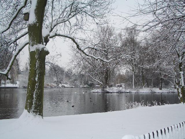 Sadat linnut pitivät puistossa kovaa mekkalaa.