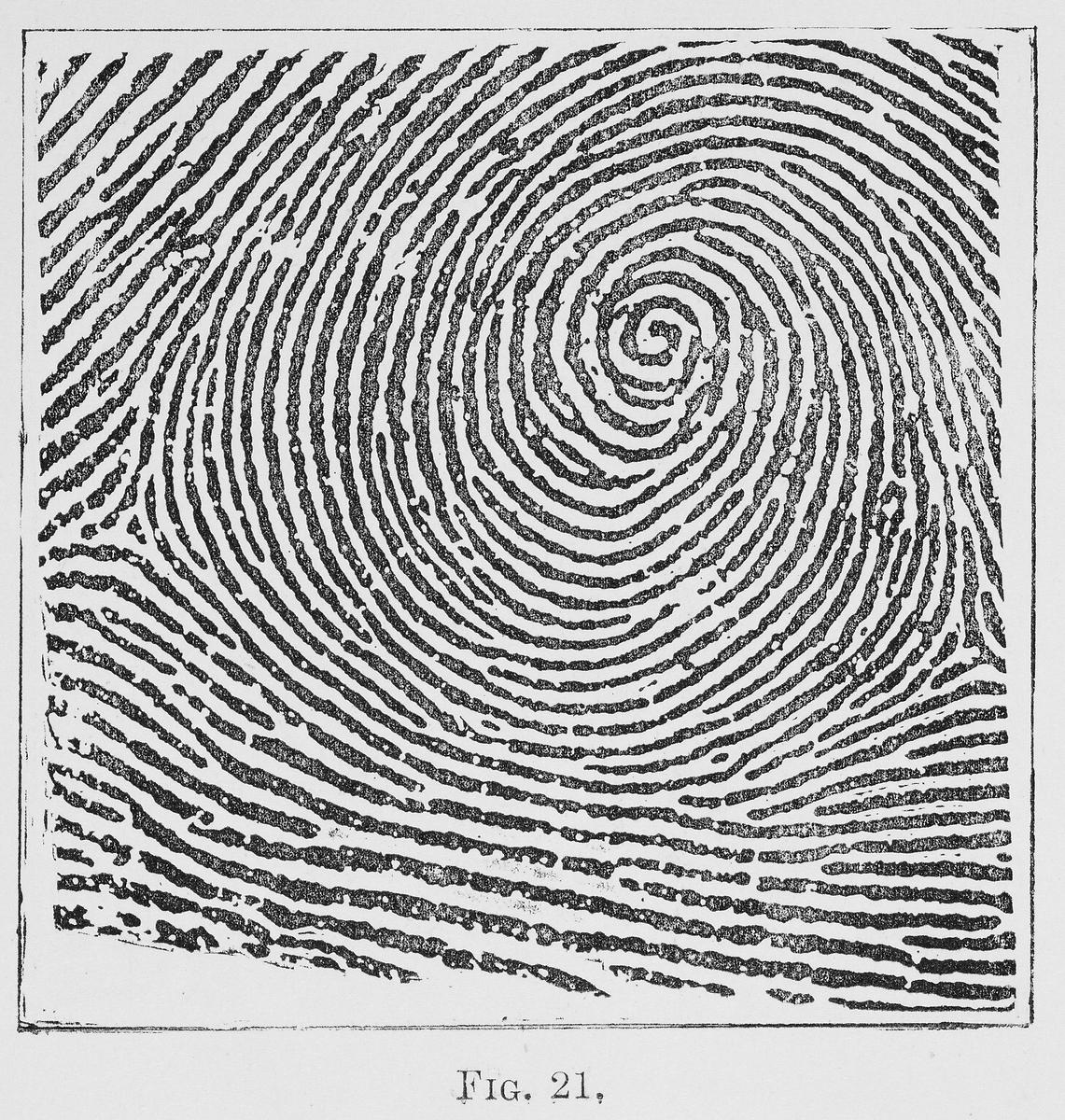 Forensic Science History Of Forensic Science Fingerprints