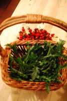 Oxeye daisy greens