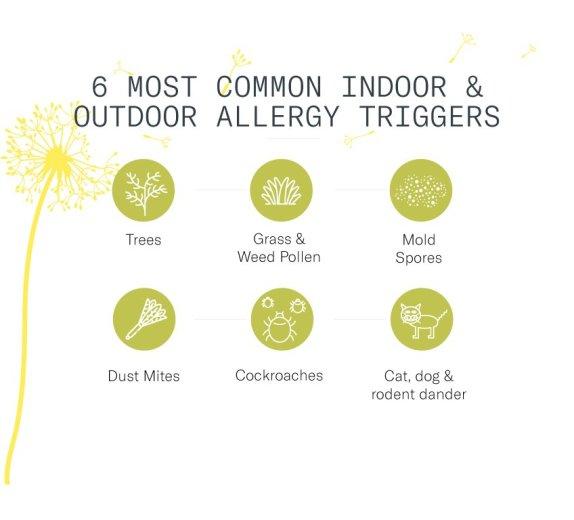 indoor-outdoor-allergies-infographic