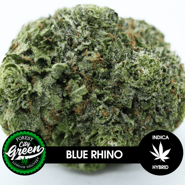 Blue Rhino forestcitygreen