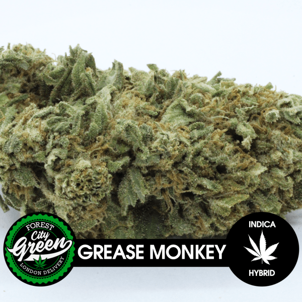 Grease Monkey B forestcitygreen