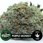 Purple Monkey forestcitygreen