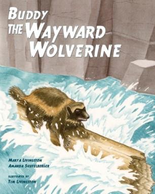 Buddy The Wayward Wolverine, wolverine, gulo, gulo gulo, childrens book, watercolor