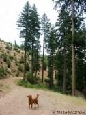 Blitz loved the woods.
