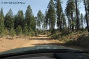 forestry, forest, logging road