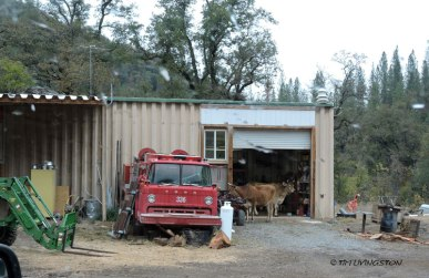 Only in French Gulch would you park your fire truck in the drive and your cows in the garage.