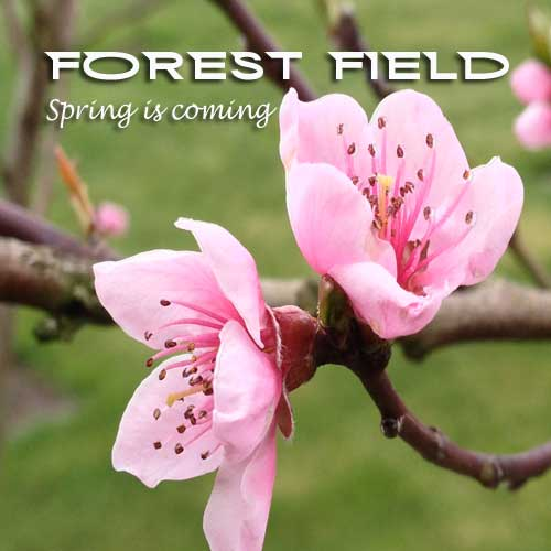 Forest Field - Spring Is Coming