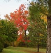 Nov 2 2013 parkway fall color 006