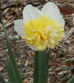 April 3, 2015 flowers 037