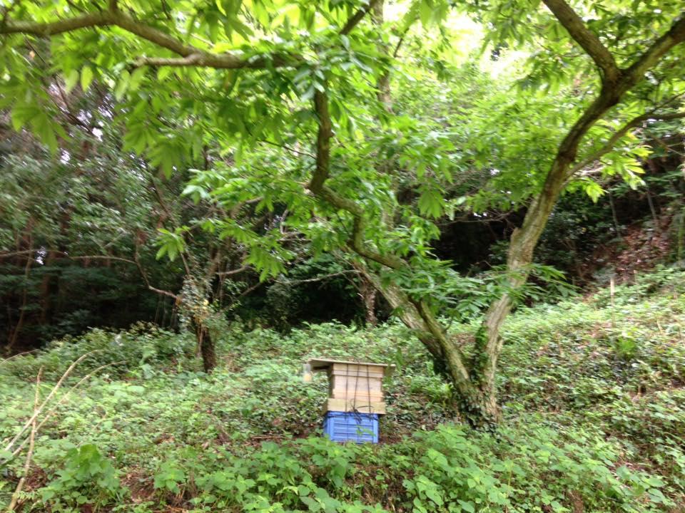 蜂の巣箱、移設。