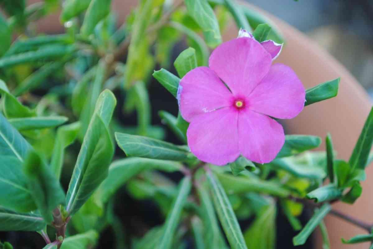 http://pixabay.com/en/impatiens-purple-flower-plant-666480/