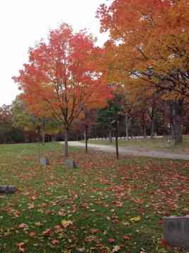Forest Hill Scene with Fall Leaves