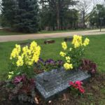 Colorful annuals