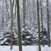 01-winter