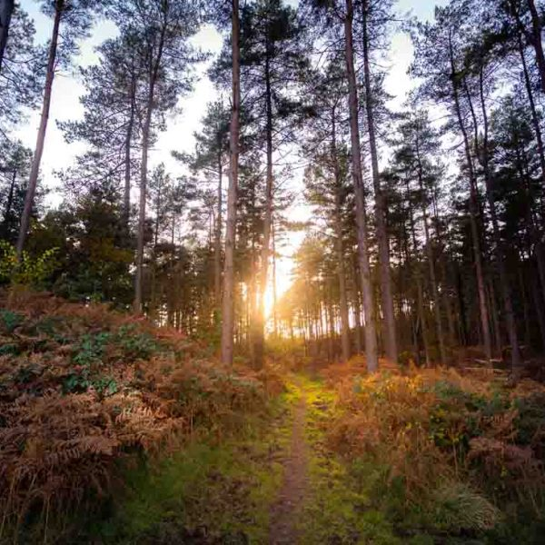 self-catering-forest-of-dean