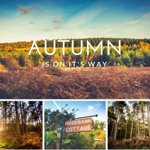 AUTUMN-forest-of-dean