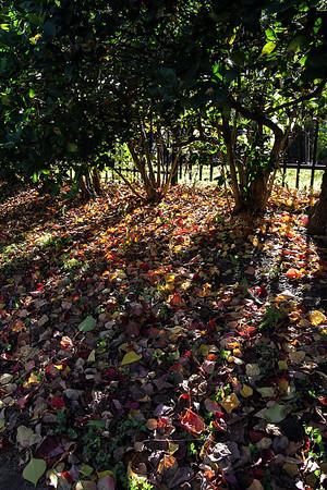 [Photo Art] Evidence of Autumn II
