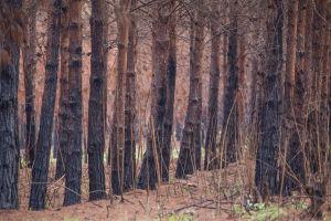 Tree planting in Tanzania