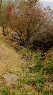 dried up ephemeral stream 2