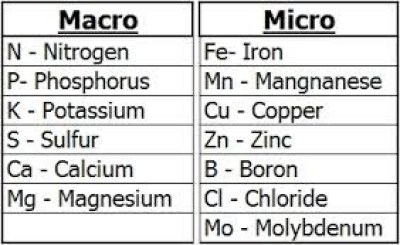 macro and micronutrients - forestrypedia.com