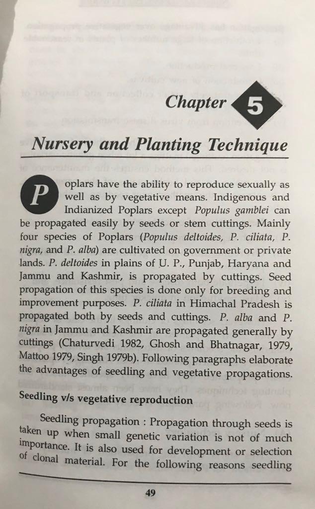 Poplar (Populus deltoides) raising and farming - Forestrypedia