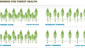 Thinning Operations and Their Effect on Tree Growth (Seminar) - Forestrypedia