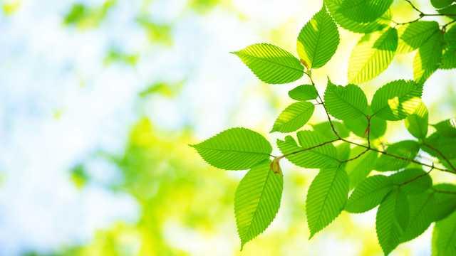 Tree Identification - Forestrypedia