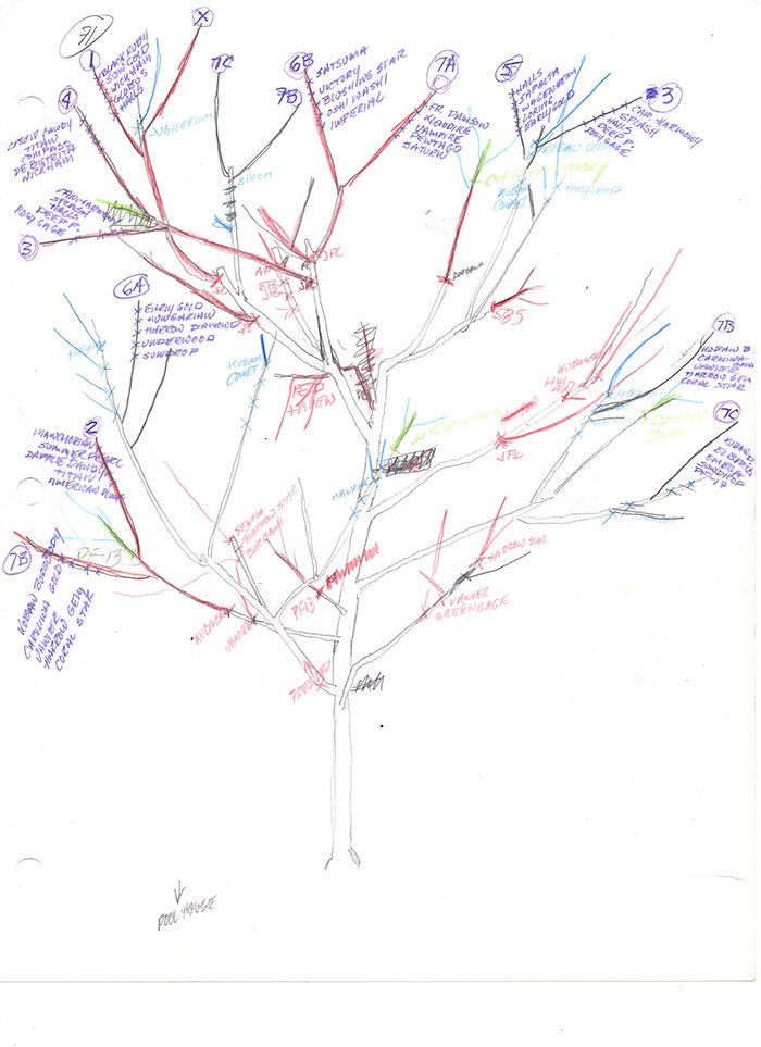Tree of 40 Fruits - Forestrypedia