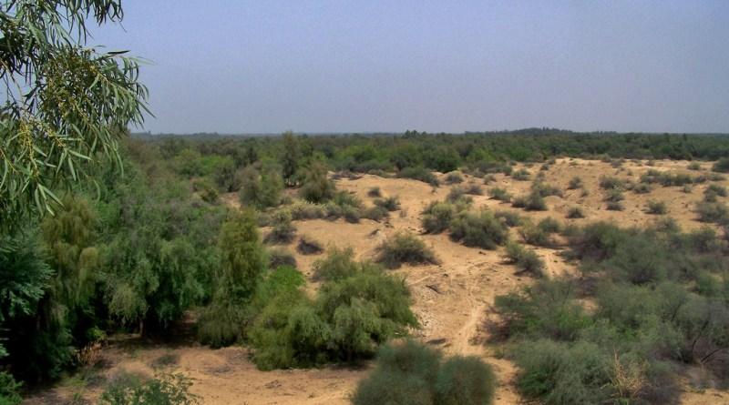 Ethnobotanical Survey of Cholistan (Thesis) - Forestrypedia