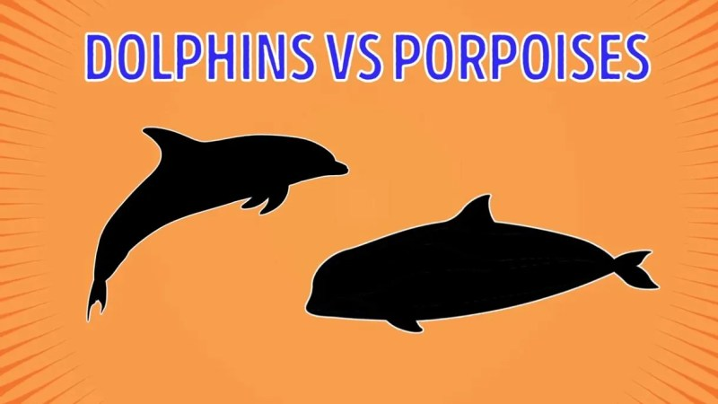 Dolphins Vs Porpoises - Forestrypedia
