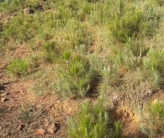 Natural Regeneration (Term Paper) - Concept of Closure to enhance Natural Regeneration - Forestrypedia
