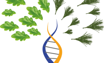 Forest Genetics - Forestrypedia