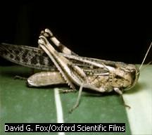 Grasshopper - Forestrypedia