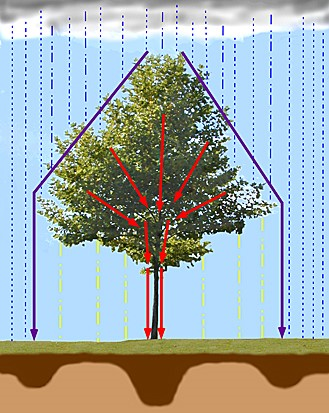 The Hydrological Role of Vegetation - Forestrypedia