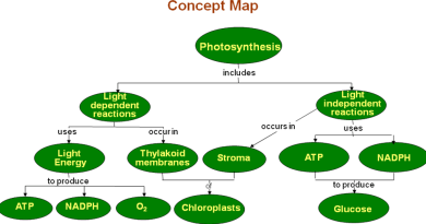 Plant Morphology and Physiology - Forestrypedia