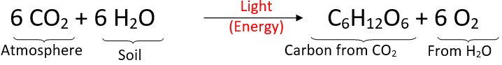Photosynthesis equation - Forestrypedia