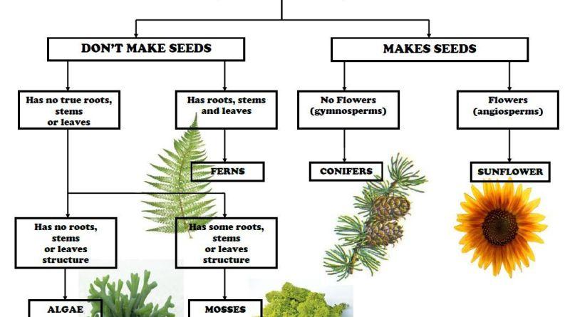 Short Notes Plant Taxonomy - Forestrypedia