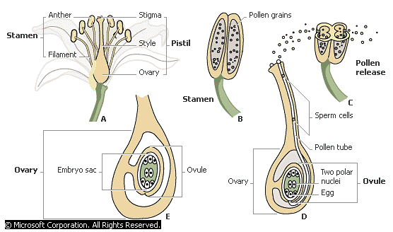 Sexual Reproduction - Forestrypedia