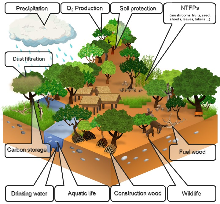Forest Protection and Site Maintenance (Seminar) - Forestrypedia