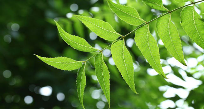 Ethnobotanical and Economic Evaluation of Medicinal Plant of Murree (Thesis) - Forestrypedia