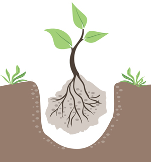 Planting Techniques on Special Sites (Term Paper) - Forestrypedia