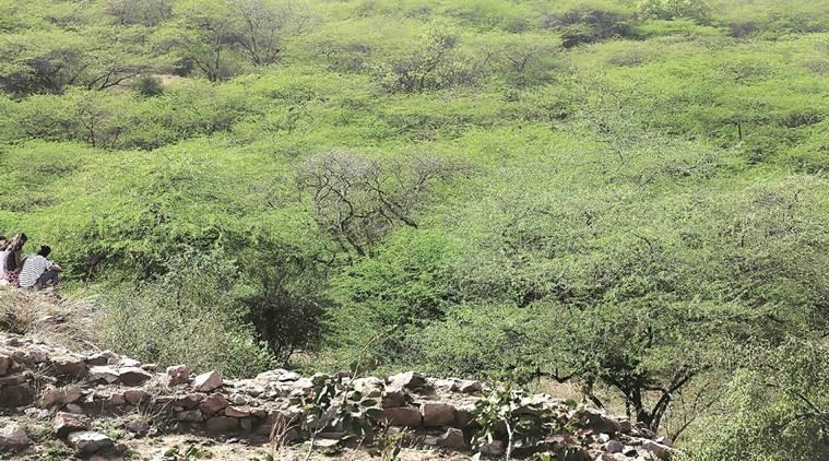 Prosopis juliflora - Forestrypedia