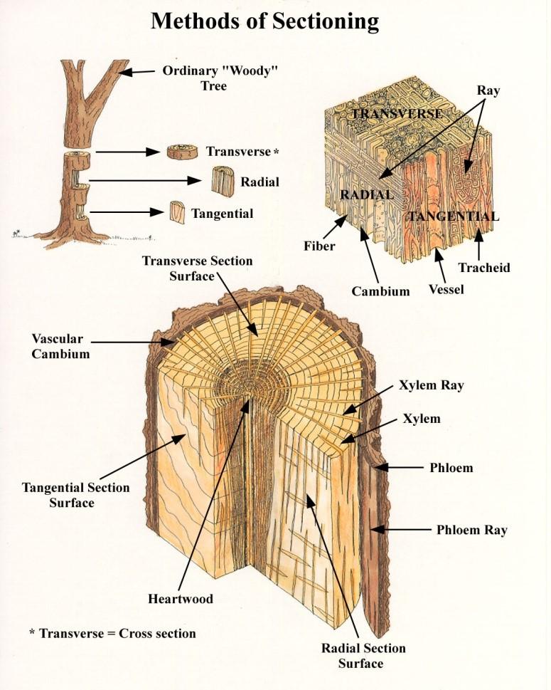 Fiber - Forestrypedia
