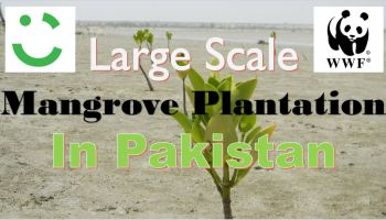Massive Mangrove Plantation Drive - WWF-Pakistan and Careem Initiate Massive Mangrove Plantation Drive