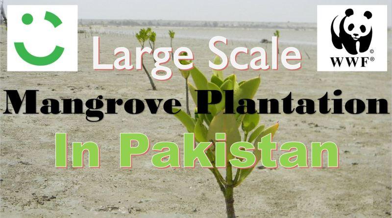 Massive Mangrove Plantation Drive - WWF-Pakistan and Careem Initiate Massive Mangrove Plantation Drive