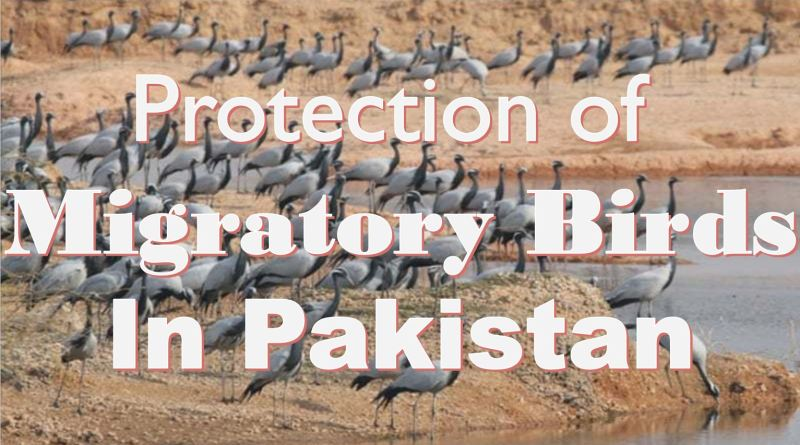Protection of Migratory Birds