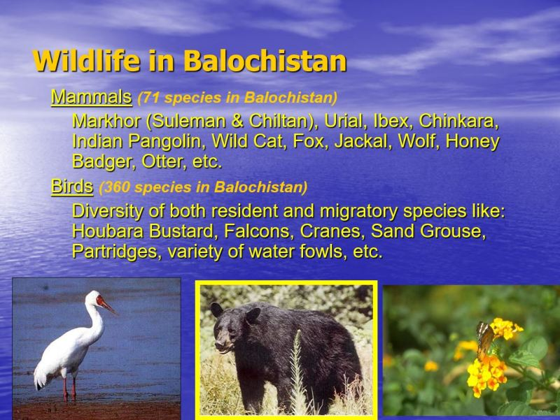 Wildlife in Balochistan