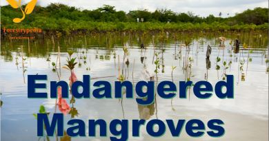 Endangered Mangroves - Forestrypedia